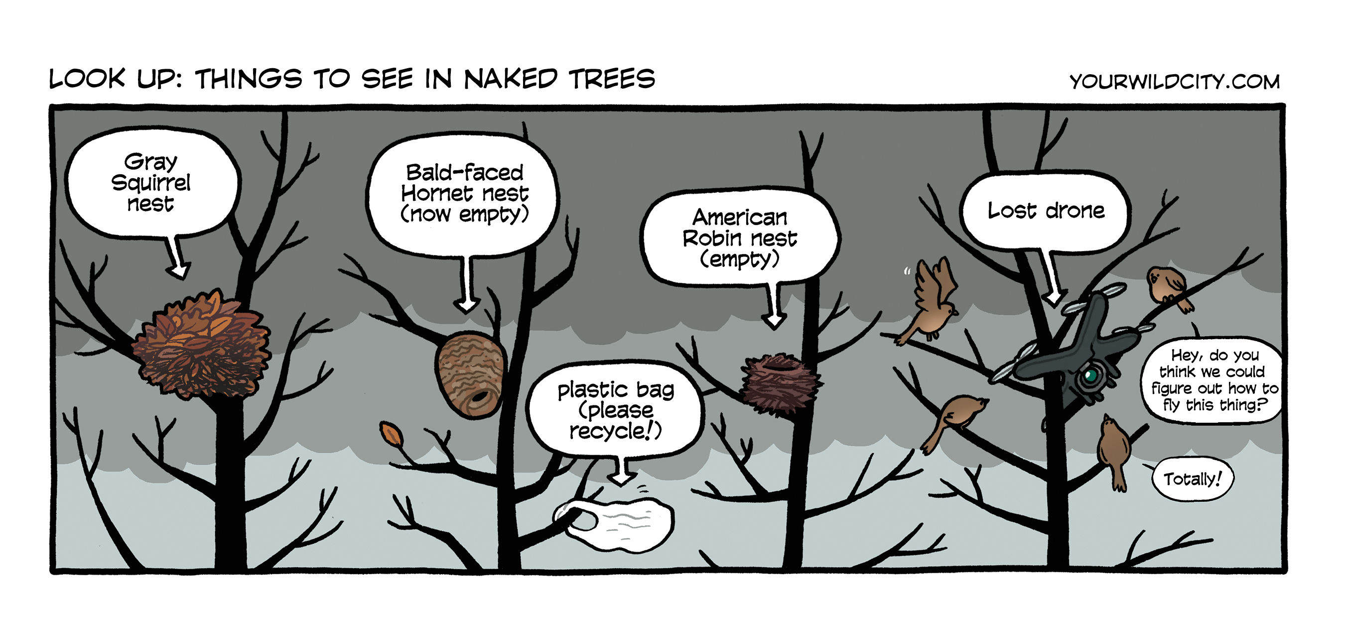 Things in Bare Branches