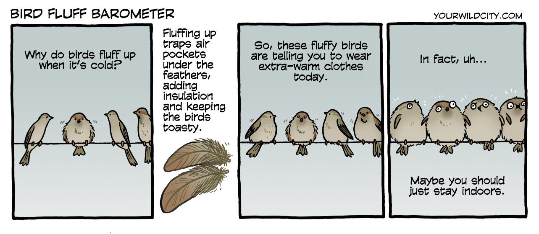 Bird Fluff Barometer