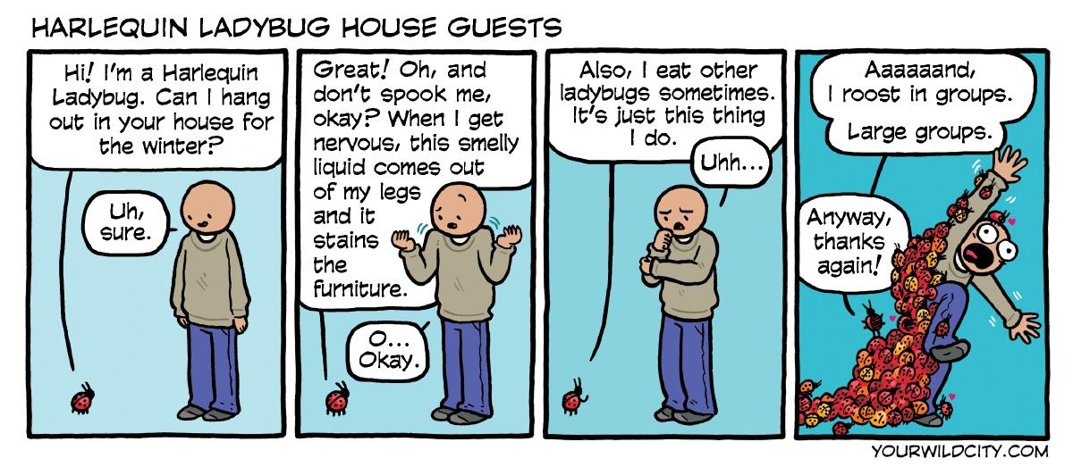 Harlequin Ladybug House Guests