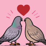 Rock Dove Love