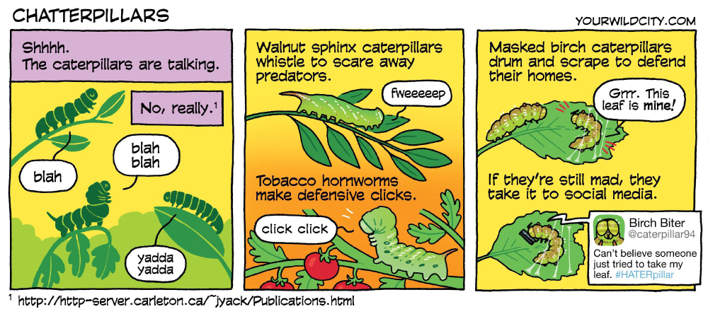 Chatterpillars