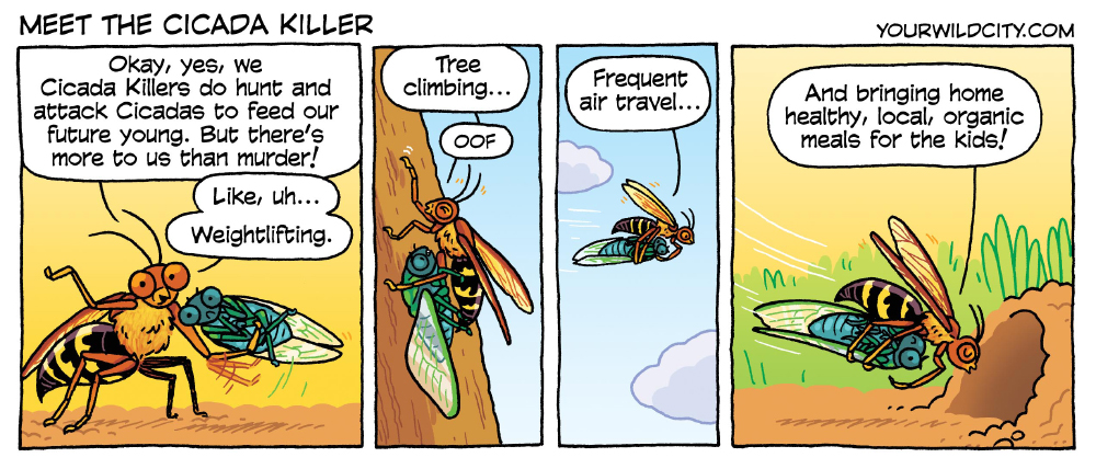 Meet the Cicada Killer