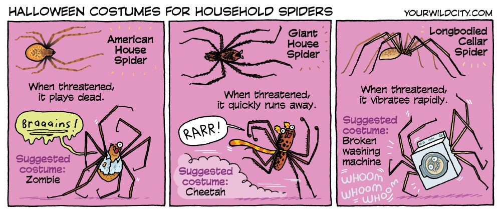 Halloween Costumes for Household Spiders