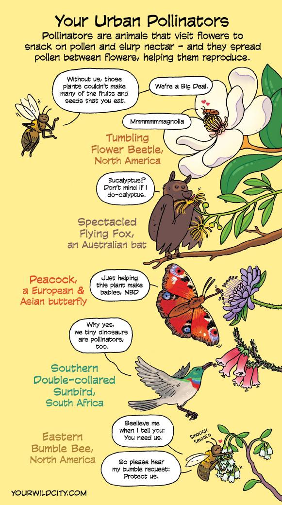 Urban Pollinators